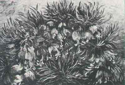 Fritillaries