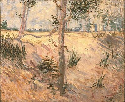 Trees in a Field on a Sunny Day