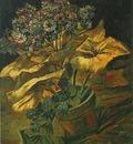 Cineraria in a Flowerpot