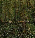 trees and undergrowth version