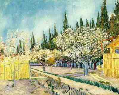 orchard in blossom, bordered by cypresses version