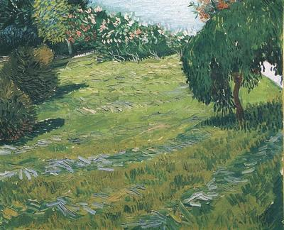 Sunny Lawn in a Public Park