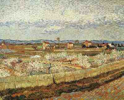 La Crau with Peach Trees in Blossom