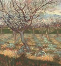 apricot trees in blossom version