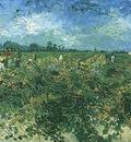 Green Vineyard, The