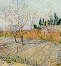 Orchard with Peach Trees in Blossom