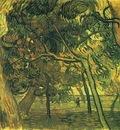 Study of Pine Trees