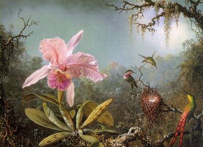 Martin Johnson Heade A Paradise