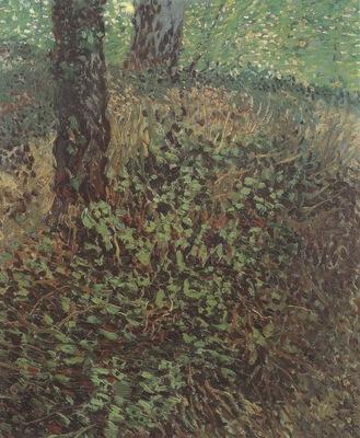 undergrowth, paris