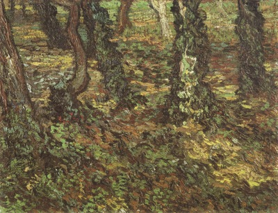 tree trunks with ivy, saint remy