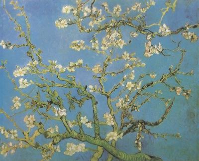 almond flower, saint remy