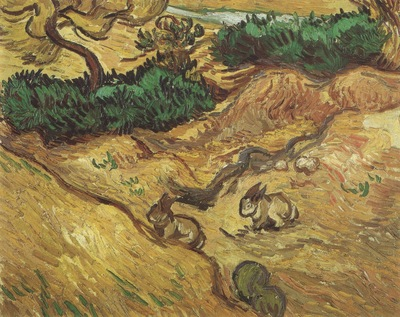 field with rabbits, saint remy