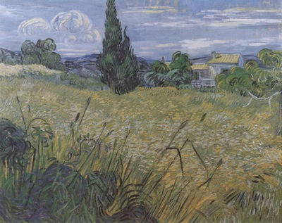 green wheat field with cypresses, saint remy