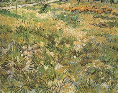 meadow in the garden of saint pauls hospital, saint remy