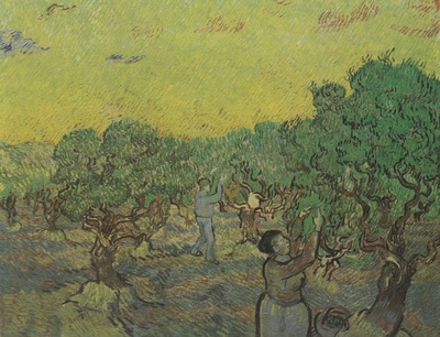 olive grove with figures in the harvest, st remy in