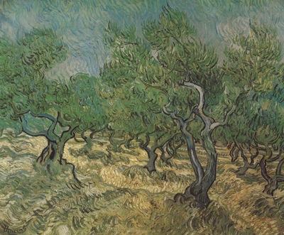 olives, saint remy