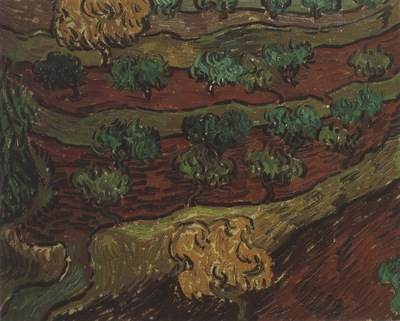 olives in the slope of a mountain, saint remy