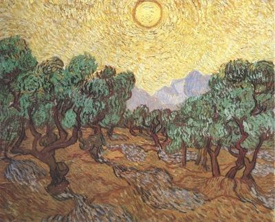 olives under the sunshine, saint remy