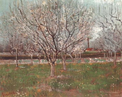 orchard in blossom plum , arles