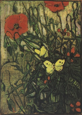 poppy and butterflies, saint remy