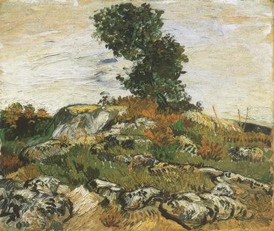 rocks oaks, arles