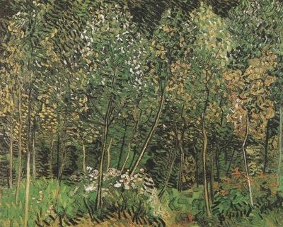 the grove, auvers sur oise