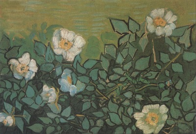 wild roses, saint remy