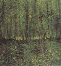 trees and undergrowth, paris