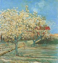 orchard in blossom, arles