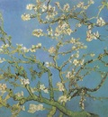 almond flower, saint remy