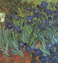 lilies, saint remy