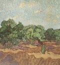 olives, pale blue sky, saint remy