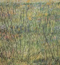 pasture in bloom, paris