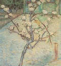 pear tree blossom, arles