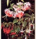 bs flo Johan Laurentz Jensen Rubrum Lilies And Fuschias