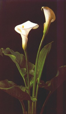 lambdin calla lilies