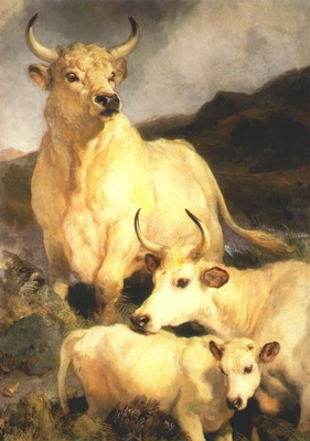 landseer wild cattle of chillingham