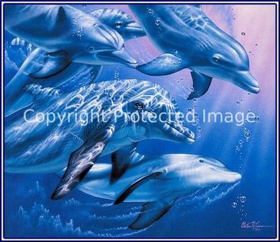 pa lassencr 09 dolphinquest