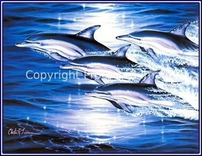 pa LassenCR 41 SeaFlight