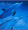 pa LassenCR 08 DolphinPair