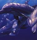 crl DolphinQuestI