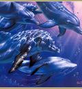 p Christian Lassen Dolphin Quest IIXL