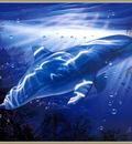 p Christian Lassen Dolphin VisionXL