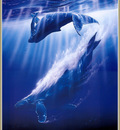 p Christian Lassen Whale SongXL