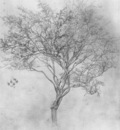 Leighton Study of a Lemon Tree