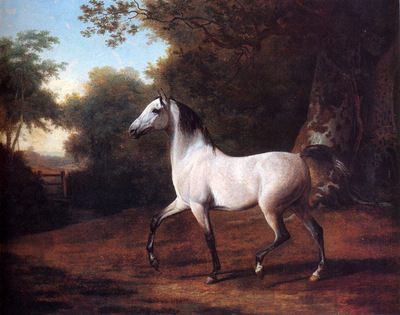 Agasse Jacques Laurent A Grey Arab Stallion In A Wooded Landscape