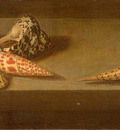 lezard coquillages