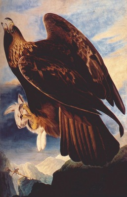 audubon golden eagle 1833