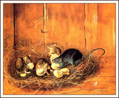bs na Audubon Black Rats