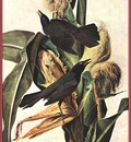 john james audubon ds ap